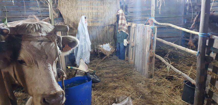 Presépio em Bajouca com figuras especiais