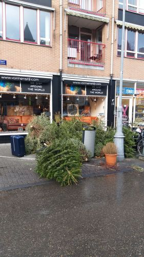 Árvores de natal abandonadas às dezenas nas ruas
