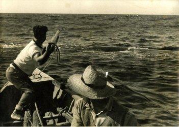 Livro recorda emigração para a América por causa da caça à baleia