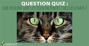Question quiz : Que veulent dire les yeux en fentes chez les chats?