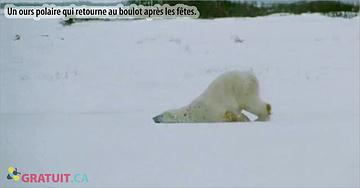 La preuve que les ours polaires n'aiment pas les lundis!