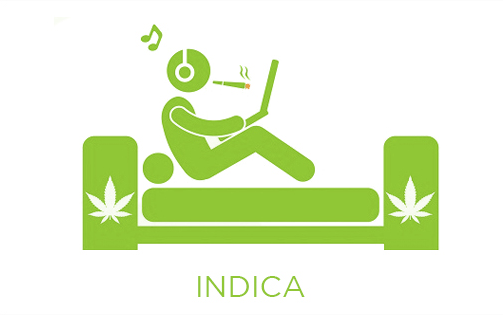 Indica strain