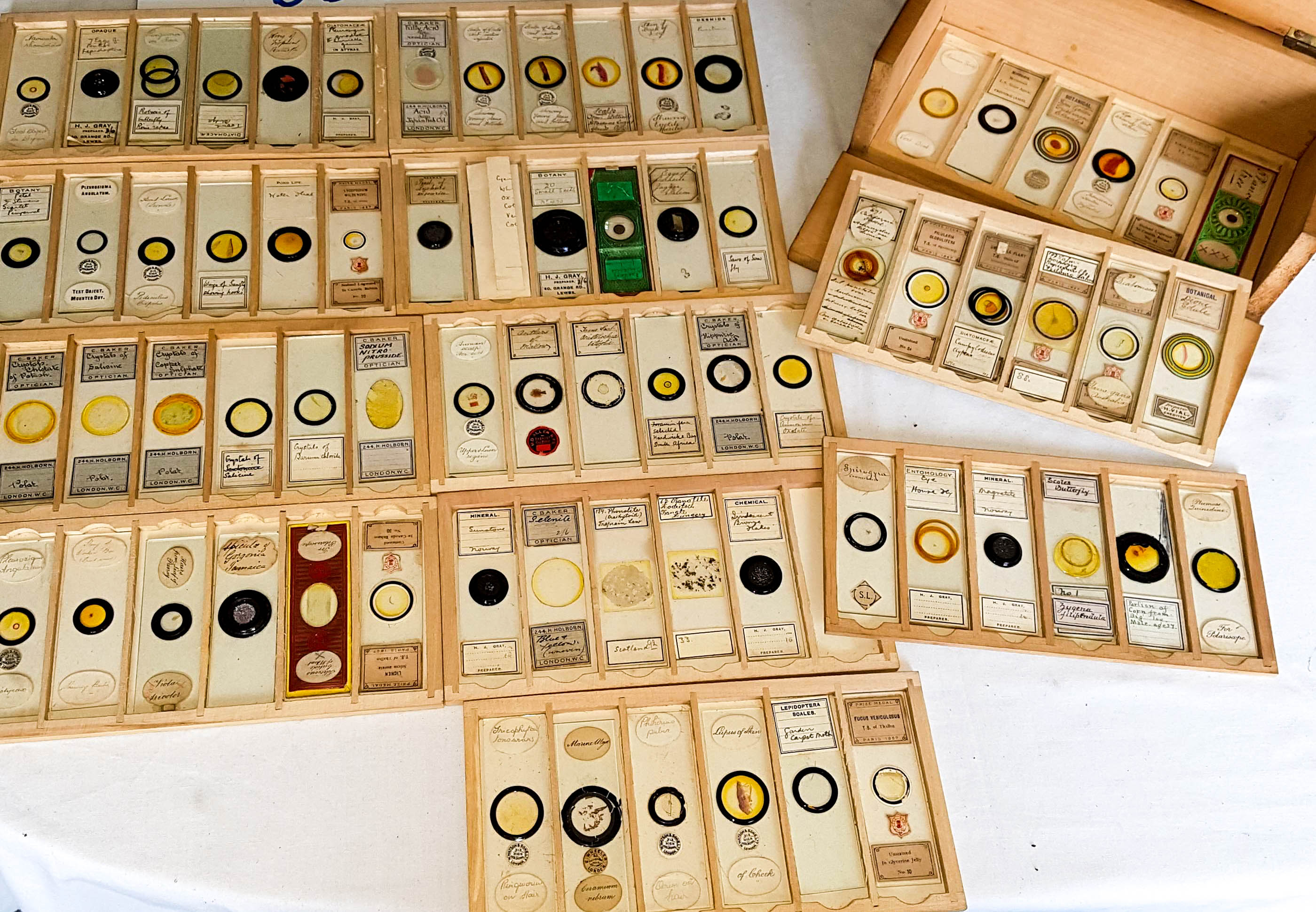 Microscope-slides-1920-1950-2.jpg