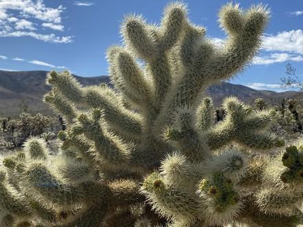 main photo of RANABB-Cactus & Mountain DF