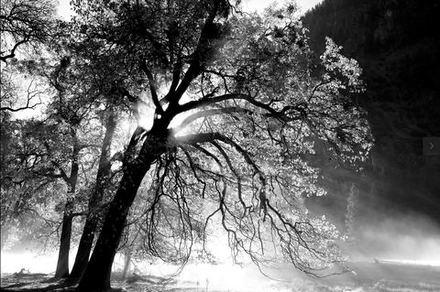 main photo of AVIDAV-Yosemite Valley Rays DF