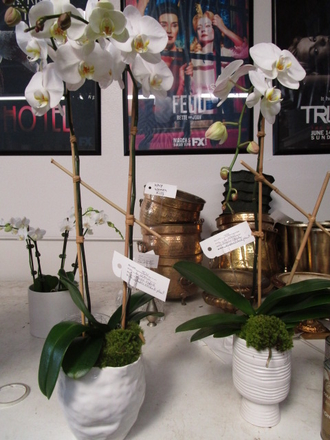 main photo of Fresh Floral Orchid Planter