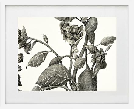 main photo of LINJOA-Weeds 6
