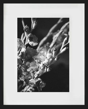 main photo of MCCDIA-Flower