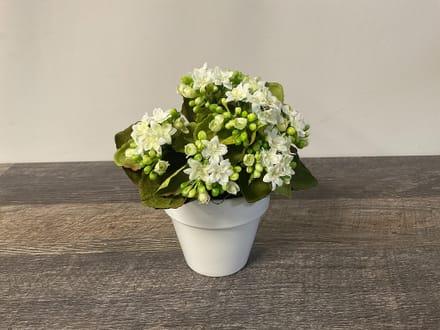 main photo of White Planting Pot Table Arrangement A