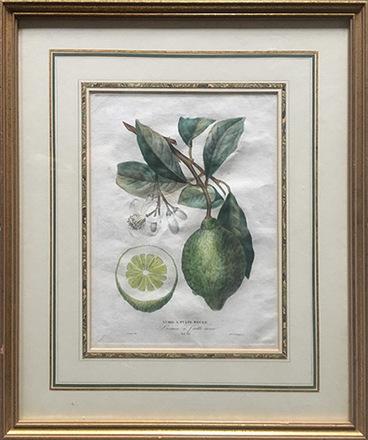 main photo of MISART-Botanical Print-Lime