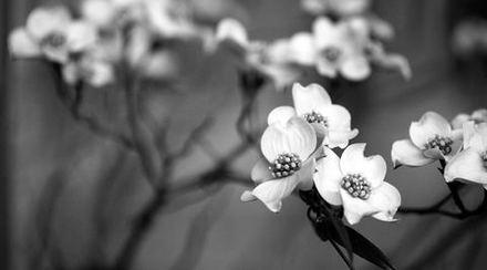 main photo of AVIDAV-Spring Flowers DF