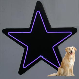main photo of PURPLE 8' Star