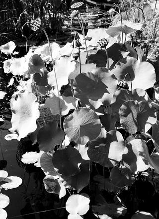 main photo of RANABB-Botanical 3