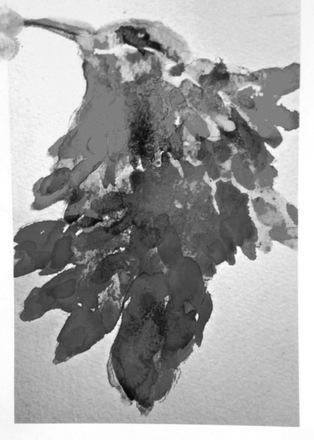 main photo of EVEJUD-Hummingbird bw DF