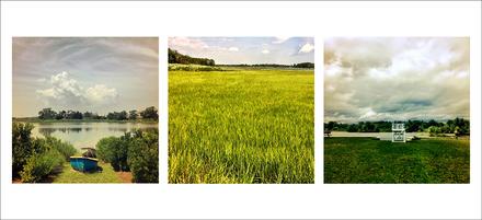 main photo of Grass