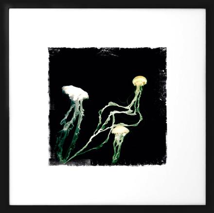 main photo of RANABB-Jellyfish 1