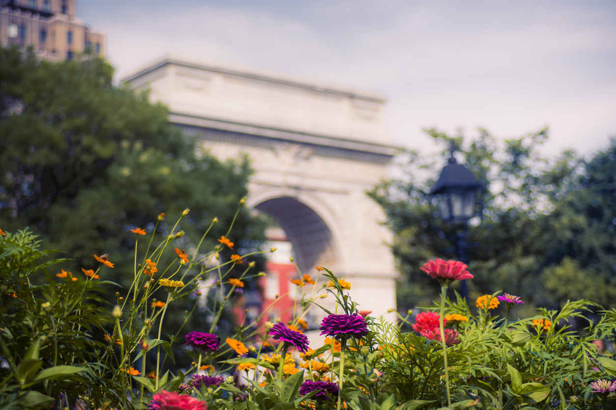 Flowers, Washington Square Park, Greenwich Village