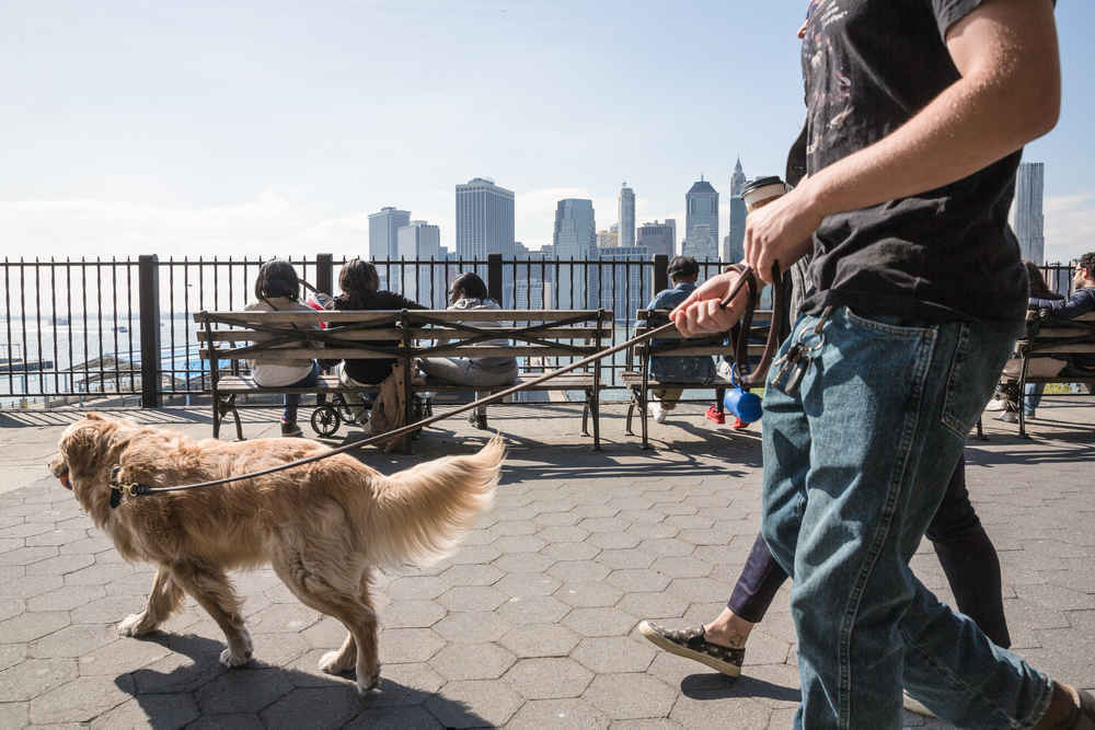 Man walking dog, Brooklyn Heights Promenade