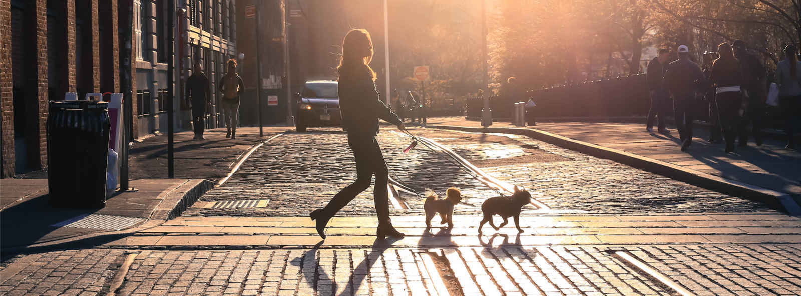 Woman walking dogs on a  cobblestone street in Dumbo, Brooklyn, NYC