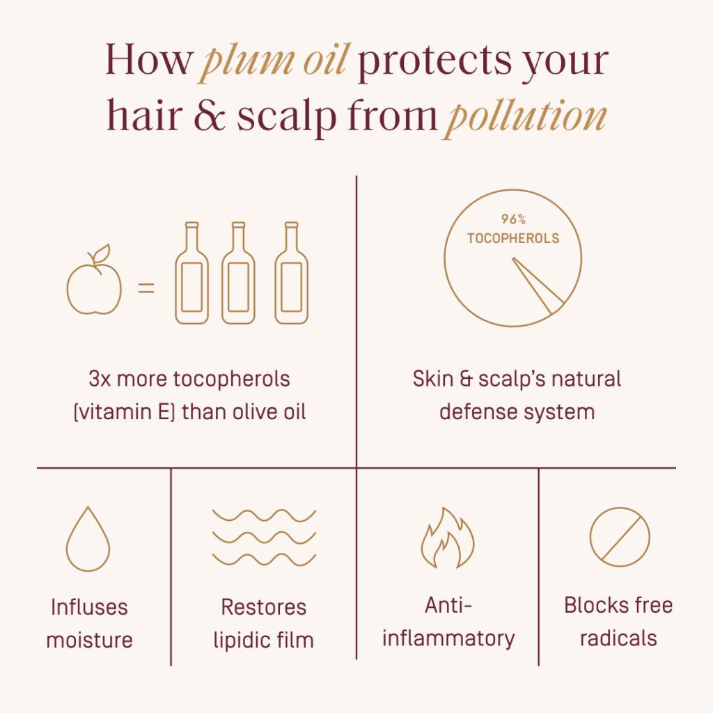 plum oil infographic