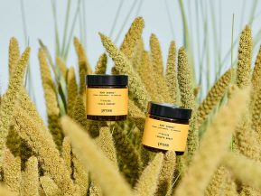 prose root source hair growth supplements