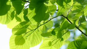Tree Header Image