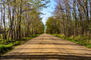 photo of a dirt road lined with trees