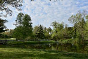 Endicott Park Pond_Summer