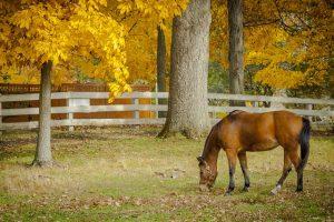 Endicott Park horse in pasture