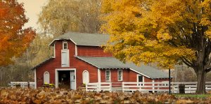 Endicott Park Barn-Fall