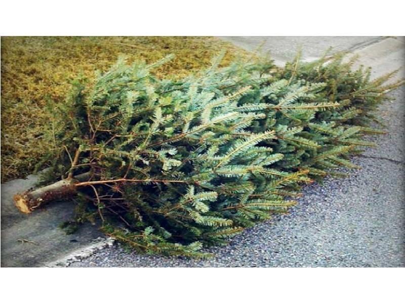 Bulk - Christmas Tree