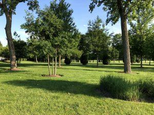 Knox Park