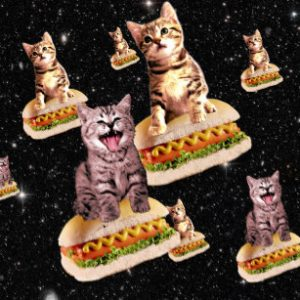 cats riding hot dogs in outer space