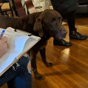 Survey on clipboard with dog in background