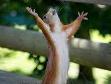 A squirrel reaches up into the air