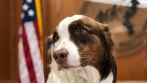 Cute dog from City of Boulder