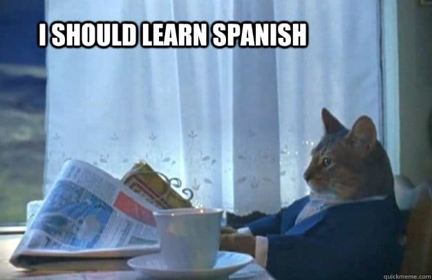 A cat that thinks it should learn Spanish