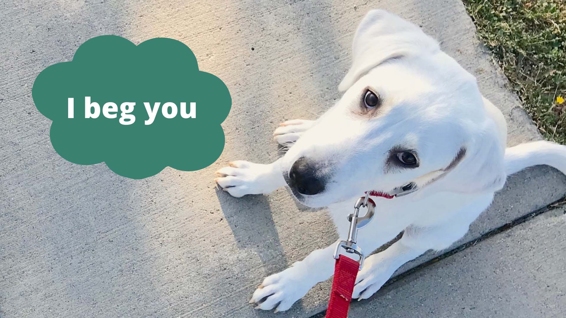 Pretty please take the survey. The puppy begs you. Image courtesy Angelica Wedell