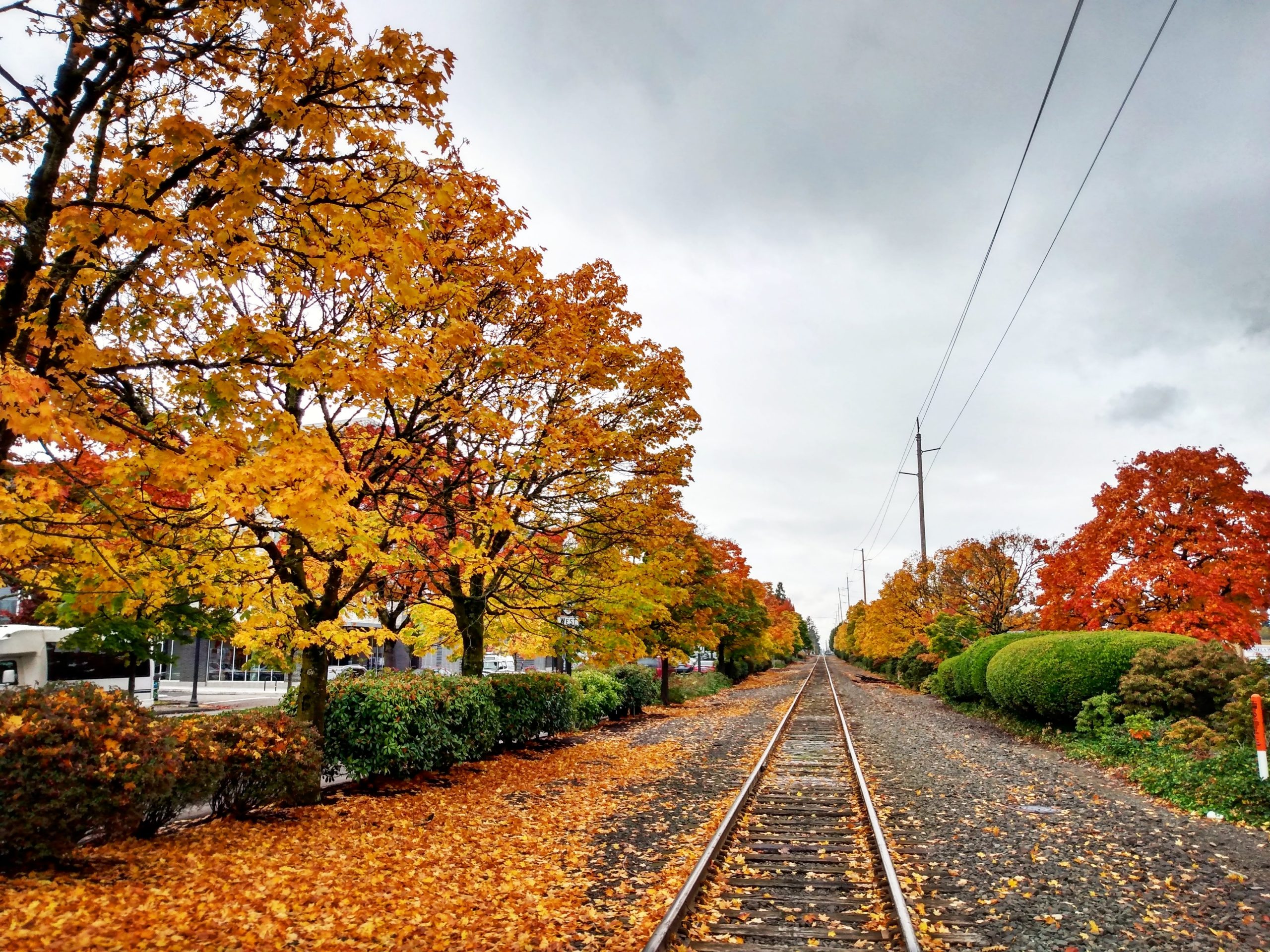 Trees and railroad tracks in the fall