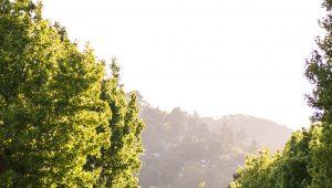 View of Fairfax Hills