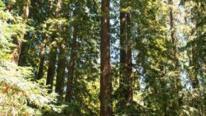 Peri Park Trees