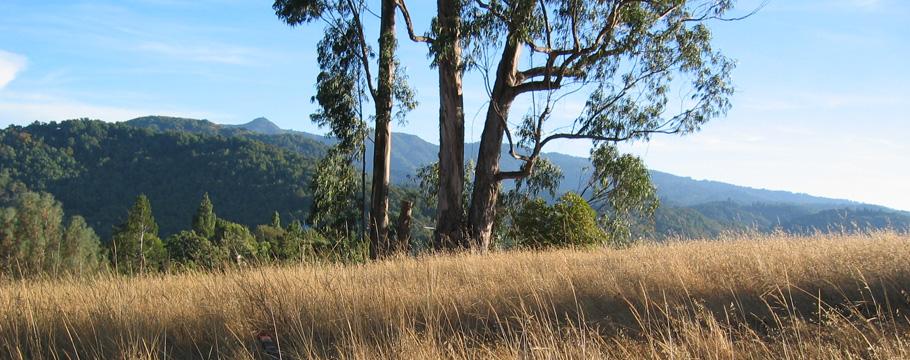 Fairfax Hills