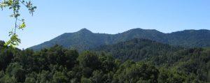 Mt.Tam