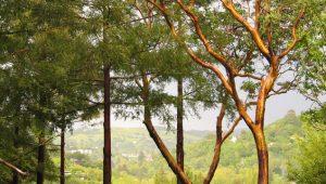 Tree Trunks 2