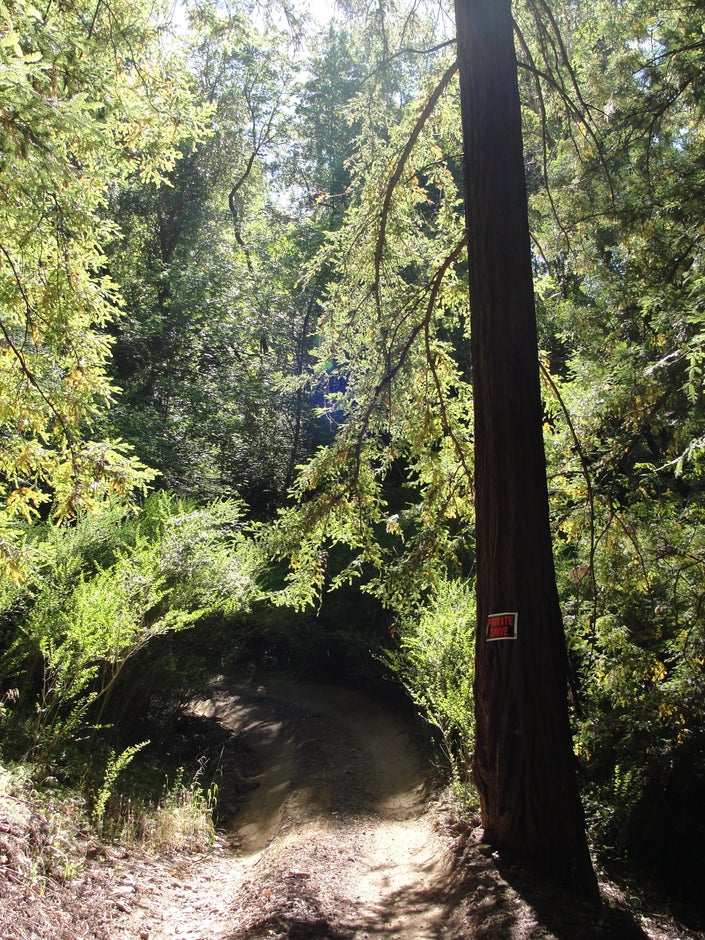 redwood grove