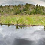 Webster Brook Wetland