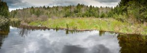 Webster Brook Wetland