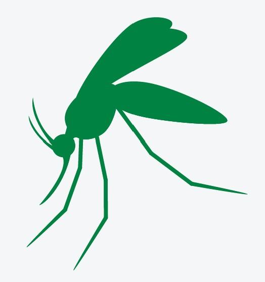 Mosquito JPG