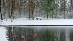 pondview winter pond