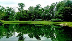 Pondview spring